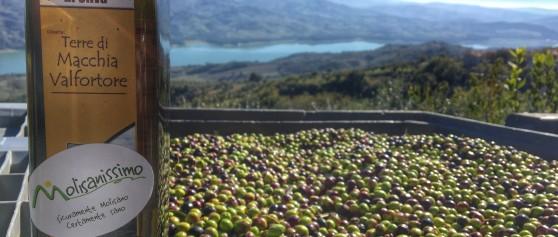 Terra di ulivi e panorami mozzafiato: i profumi dell'Olearia Terre di Macchia Valfortore